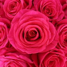 82 best dark pink wedding flowers images on pinterest wedding fiftyflowers pink floyd rockstar rose mightylinksfo
