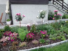 Gabi's pride and joy: her flower bed Flower Beds, Pride, Joy, Flowers, Plants, House, Florals, Raised Beds, Happiness
