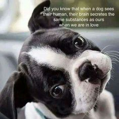 Did you know that when a dog sees their human, their brain secretes the same substance as ours when we are in love.