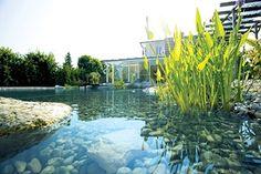 piscina_biologica