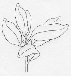 O, Sweet Nature: Botanical Illustration, rhododendron leaves.