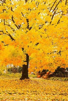 Late Autumn in Northeast Baltimore The post Late Autumn in Northeast Baltimore autumn scenery appeared first on Trendy. Fall Pictures, Fall Photos, Nature Pictures, Pretty Pictures, Natur Wallpaper, Yellow Aesthetic Pastel, Late Autumn, Autumn Scenes, Autumn Aesthetic