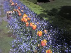 More of the gardens at Filoli