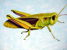 """I am Just a Grasshopper""..30x40in oil on canvas...My Bug Collection Series - Lance Jeschke Fine Art"