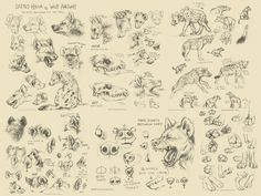 >> CLICK HERE FOR FULL SIZE PAGES!!! << A bunch of sketches studying spotted hyena anatomy and some comparisons between them and wolves to help differentiate the two. Stay tuned next we...