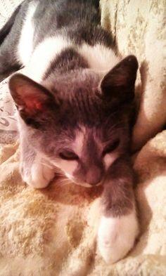 Sleepy Nola Kitty XD Kitty, In This Moment, Cats, Fun, Animals, Little Kitty, Gatos, Animales, Animaux
