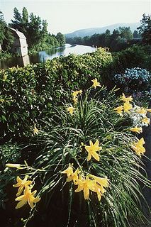 Lillies on the Bridge of Flowers, Shelburne Falls #travel #massachusetts