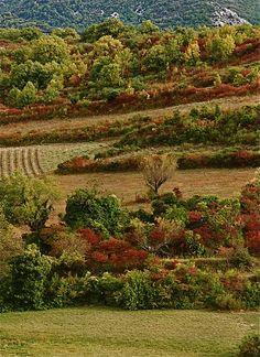 Fall colours - Provence, France