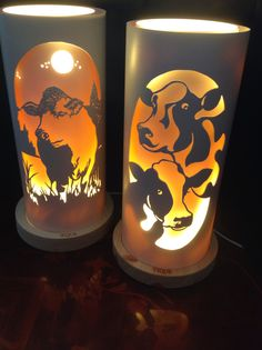 Cows and Charolais bull from Tique lights