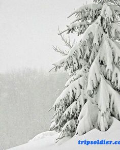 Find images and videos about white, nature and winter on We Heart It - the app to get lost in what you love.