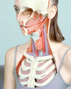 Anatomical Photomontages by Koen Hauser