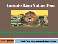African Lion Safari is a family-owned safari park situated in Hamilton, Ontario, Canada, west of Toronto. Visit On: www.torontoairport-taxi.com