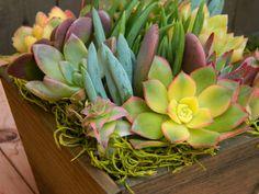 Succulent  Centerpiece, Succulent Garden, Summertime Succulent Tabletop - Succulent Wedding Centerpieces, Rustic Wedding, Housewarming Gift