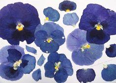 Flower set IX