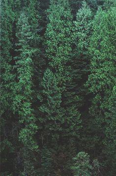 forest, landscape.
