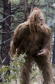 Angry Squatch