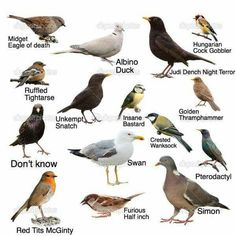 A guide to common birds in our area.