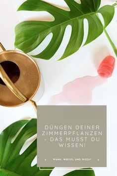 Place Cards, Place Card Holders, Plants, Knowledge, Indoor House Plants, Flowers, Flora, Plant