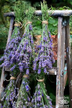 The key when harvesting lavender for crafts is to do it at the right time - before the flowers open. How and when to cut lavender and a bunch of ideas on what to do with the dried flowers.