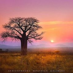 📷 Picture by: @africatracks  #tanzania  #Africa #Afrique #África #African #Afrika #Африка #アフリカ #非洲 #أفريقيا #Africans #Afrikaans #Afrikan #Africanamazing #Africanwildlife #loveafrica #iloveafrica #thisisafrica #africalove #travelafrica #visitafrica #exploreafrica #beautifulafrica #vacation ...