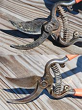 How to revitalize dirty and rusty pruning shears.