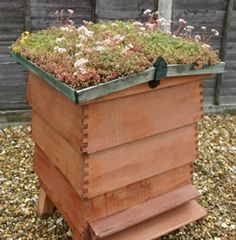 Langstroth Hive with a Green Roof