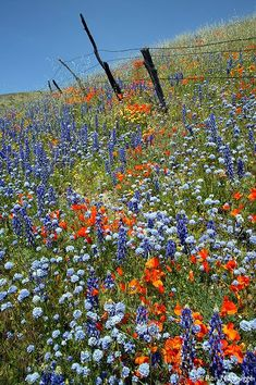 wildflowers-help provide food for the insects of the world. We need them. Our cities are food deserts for them.