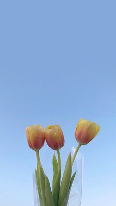 배경화면 of November Flower Aesthetic, Aesthetic Photo, Aesthetic Pictures, Aesthetic Pastel Wallpaper, Aesthetic Wallpapers, Tulips Flowers, Beautiful Flowers, Minimalist Wallpaper, Image Originale