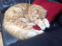 Jaspers grabbed a cushion too