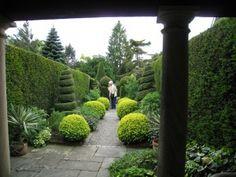 cedrus atlantica glauca pendula weeping blue atlas cedar caroline benedict smith garden design cheshire garden evergreen variegated pinterest