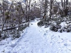 Ascending into Snowy Patagonia Winter ~ ExpedEvac Forest Trail, The Other Guys, Go Fund Me, Local Artists, Trekking, Trip Planning, Patagonia, Travel Tips, Waterfall