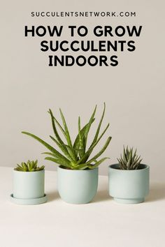 Ultimate guide to grow succulents indoors. Learn where to place for the best light and more #succulent #indoors #guide #clickhere Drought Resistant Plants, Lower Lights, Succulent Care, Christmas Cactus, Indoor Plants, Succulents, Inside Plants, Succulent Plants
