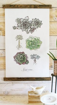 Sempervivum Study Vol.1 $70 orders over $50 get free shipping.