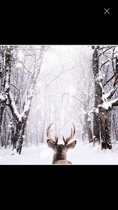 Image de snow, winter, and deer