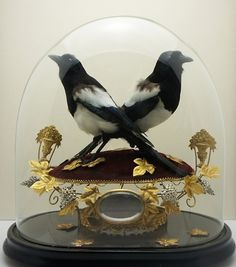 Unique piece made by Charlotte Proudlove using vintage and antique curios with taxidermy