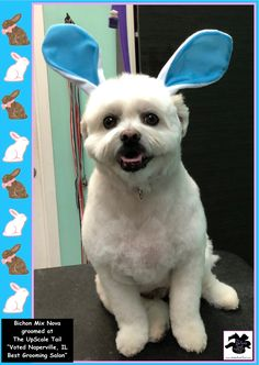 15 best greenbriar veterinary hospital luxury pet resort images on all breed and rare breed grooming at the upscale tail voted naperville il pet solutioingenieria Image collections