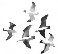 Dibujos a blanco y negro o en acuarelas de diferente tipos de pájaros - Watercolour or black and white drawings of birds.