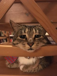 awwww-cute: My cat using the back of the chair as a face rest (Source: http://ift.tt/2tffgw5)