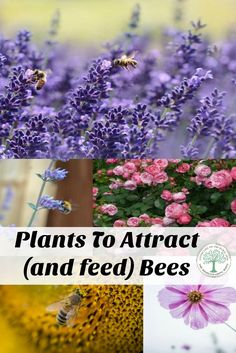 Plant some of these flowers to help attract and feed the bees! The Homesteading Hippy via @homesteadhippy