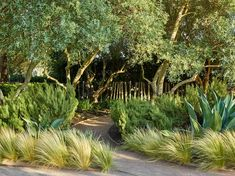The New American Garden, The Landscape Architecture of Oehme, van Sweden | Garden at Cornerstone, Sonoma, CA, photo by Marion Brenner.