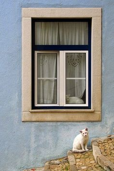 White cats in window with pale blue wall in Lisbon, Portugal. Click here to see more cats of Portugal www.traveling-cat...