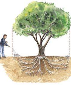 The ABCs of fertilizing trees.I am posting this for those of you who do not know how to properly fertilize trees Fine Gardening, Organic Gardening, Gardening Tips, Garden Trees, Lawn And Garden, Trees And Shrubs, Trees To Plant, Baumgarten, Unique Gardens