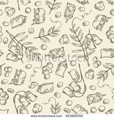 Seamless with lentil: leaf, plant, pod and seed of lentil. hand drawn