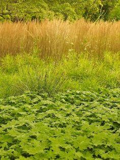 Oehme, van Sweden Hamptons Garden - Gallery | Garden Design