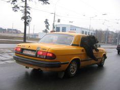 Pendant ce temps là, en Biélorussie...