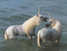 Real Unicorn Sightings | Unicorn Watching in Unicorn Dreams at Lair 2000