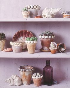 Shells around planter pots-my 3 year old would enjoy doing this as a craft then planting some flowers in them.