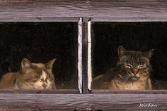 Photo Sleeping derrière les fenêtres de Roger Dan sur 500px
