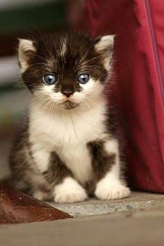 """.meow   =^..^=Thanks, Pinterest Pinners, for stopping by, viewing, re-pinning, & following my boards.  Have a beautiful day! ^..^ and """"Feel free to share on Pinterest ^..^   #catsandme #cats #doghealthcareblog"""