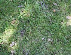 Moos entfernen Garten,Rasen,Moos,Gras